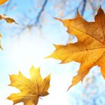 Autumn family offer of Hotel Malin