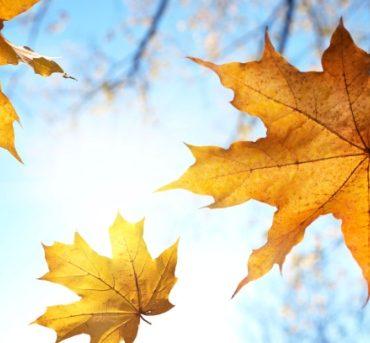 Herbstangebot für Familien im Hotel Malin
