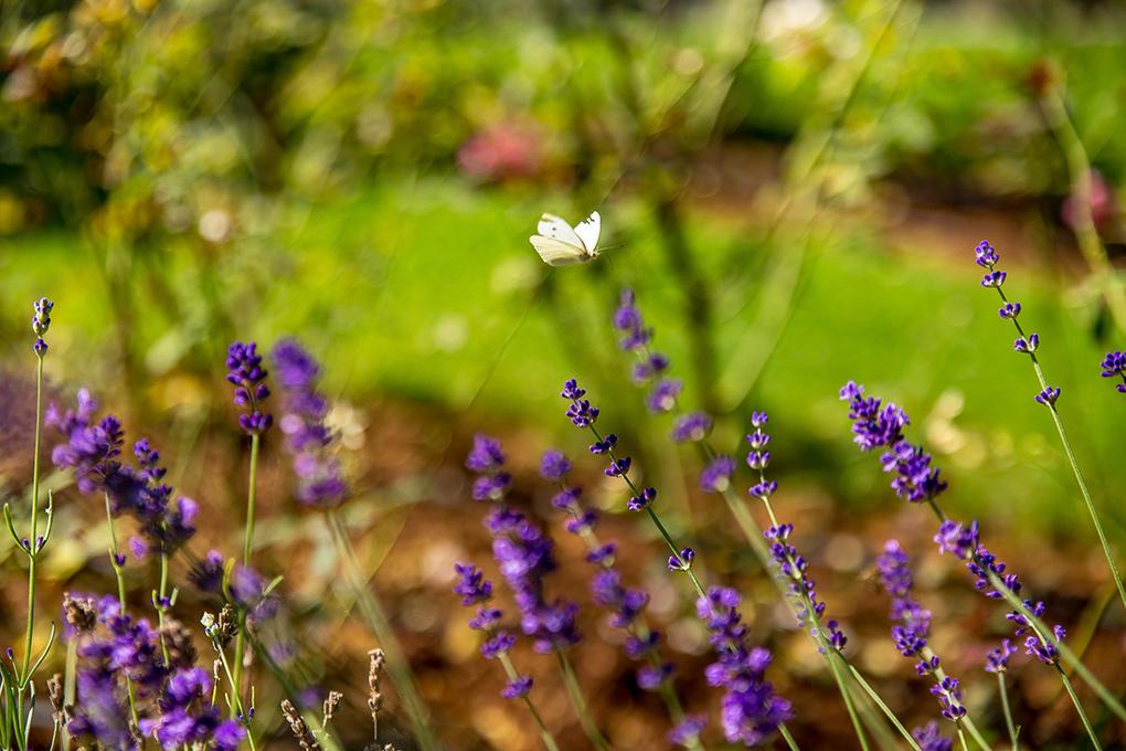 Proljetno buđenje prirode u Malinskoj na otoku Krku
